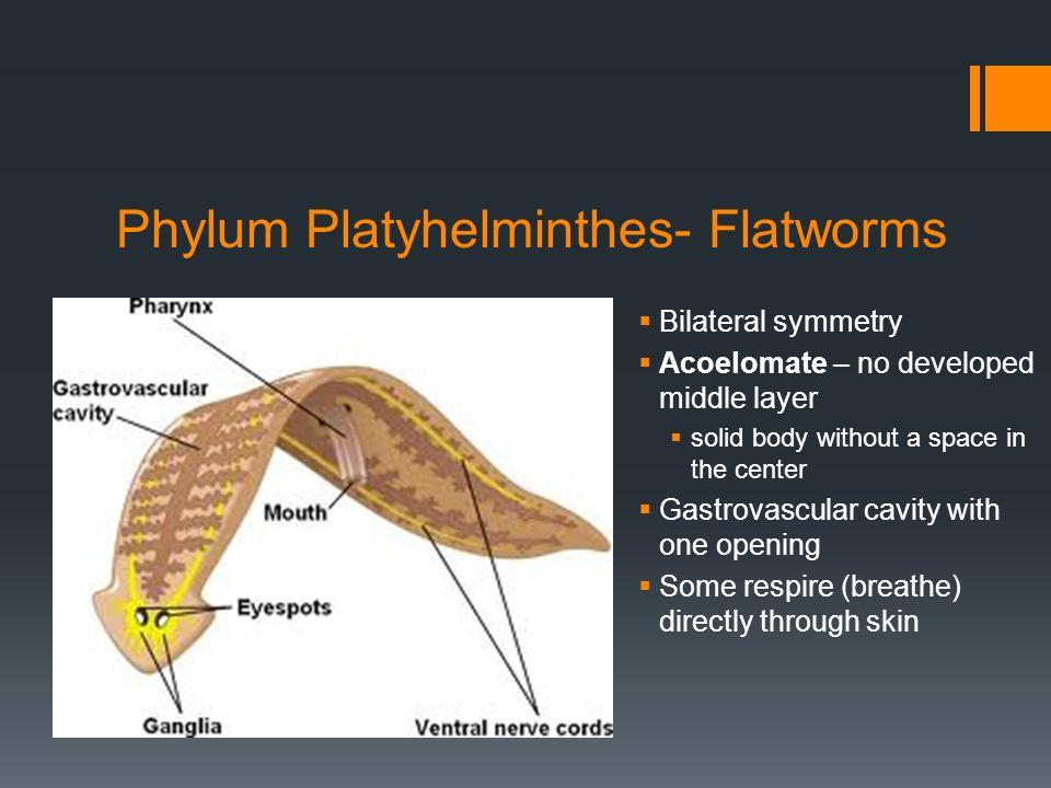nematode ppt phylum platyhelminthes detoxifiere tigari