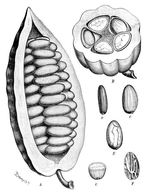 numărul de specii de platyhelminthes