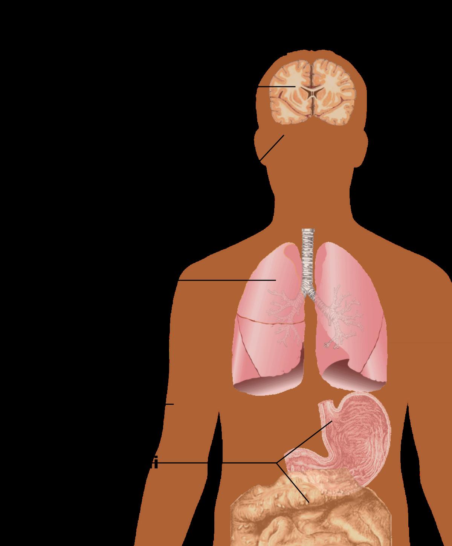 Virus hpv gola sintomi - Înțelesul