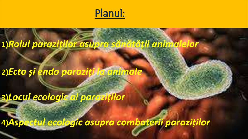O specie de bacterii poate consuma viermi paraziţi
