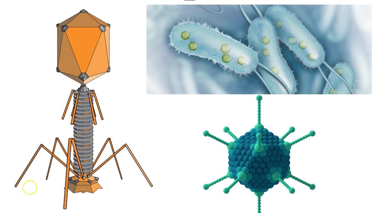 virusi umani